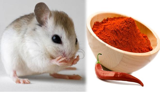 Mẹo diệt chuột dân gian an toàn