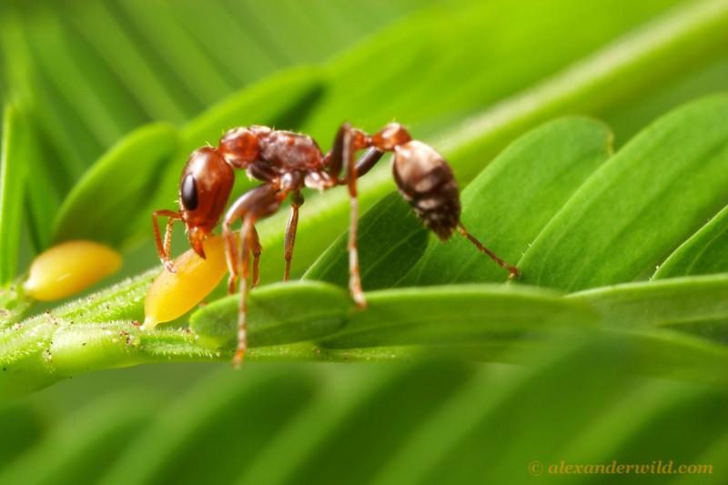 10 loài côn trùng đốt đau nhất thế giới