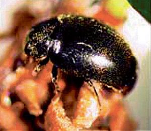 Chiêu mới trong cuộc chiến chống côn trùng