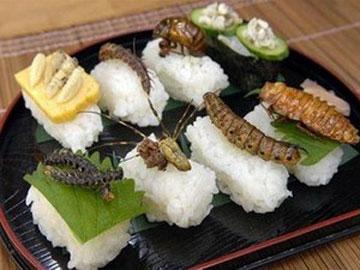 Ăn côn trùng – giải pháp mới để cứu môi trường