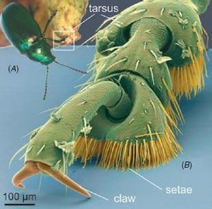 Băng dính côn trùng