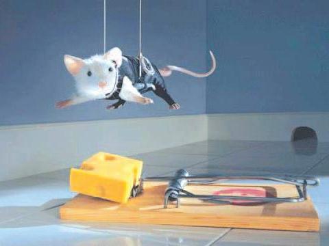 Giúp nông dân diệt chuột