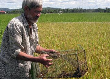 Diệt chuột bằng bẫy cây trồng