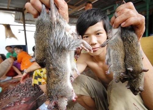 Cách diệt chuột trong nhà hiệu quả tận gốc