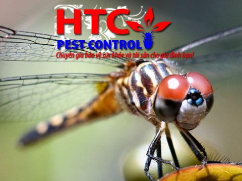 Những loài côn trùng to nhất trên thế giới
