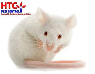 Diet chuot: Chăm sóc chuột ở Trại Chăn nuôi Suối Dầu