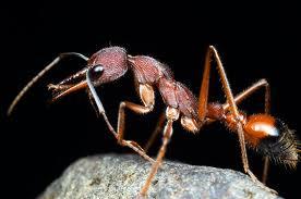 Tìm hiểu về kiến