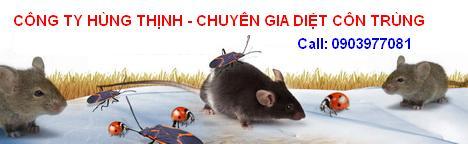 Diệt côn trùng: dịch vụ diệt côn trùng uy tín tại Việt Nam