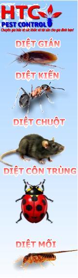 Cong ty diet moi