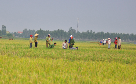 Diệt chuột cho nông dân Quảng Nam