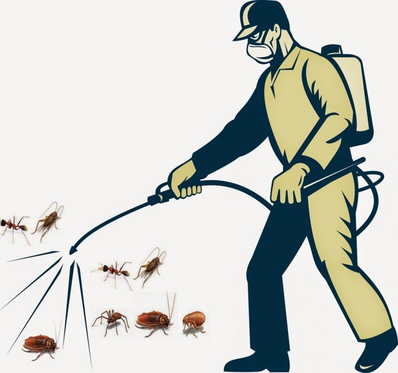 Tiêu diệt côn trùng để đảm bảo an toàn cho gia đình bạn