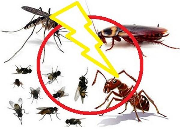 Diệt côn trùng chuyên nghiệp tại Hà Nội