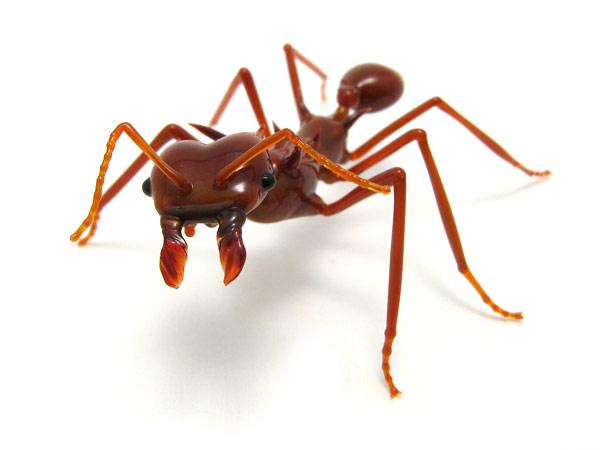 Loài kiến
