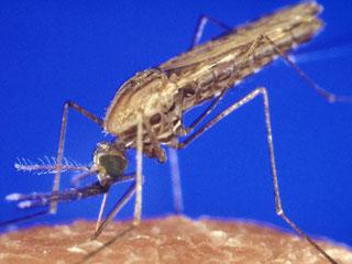 Diệt muỗi để chặn sốt rét