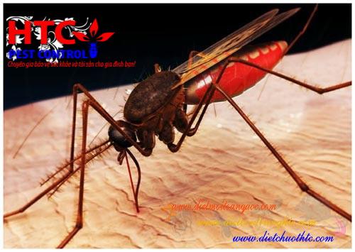 Kiểm soát muỗi truyền bệnh bằng cách ngăn muỗi bài tiết nước tiểu