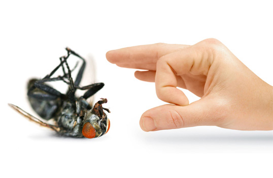 Những cách đuổi ruồi hiệu quả cho gia đình bạn