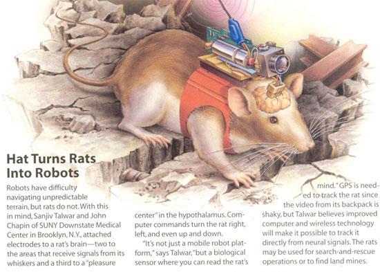 Dùng chuột bạch dò bom mìn