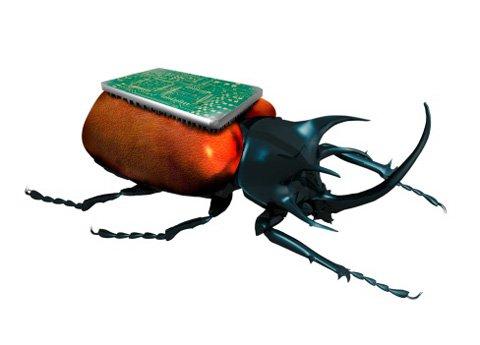 Sử dụng côn trùng để tìm kiếm cứu hộ
