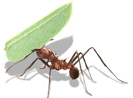 Mẹo diệt kiến