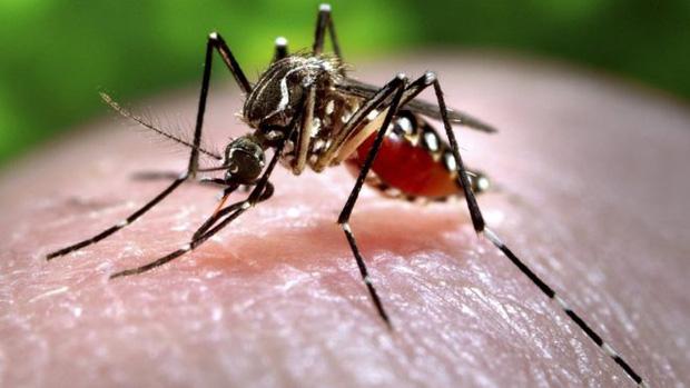 Thế giới sẽ ra sao nếu muỗi biến mất ? – Thế giới côn trùng