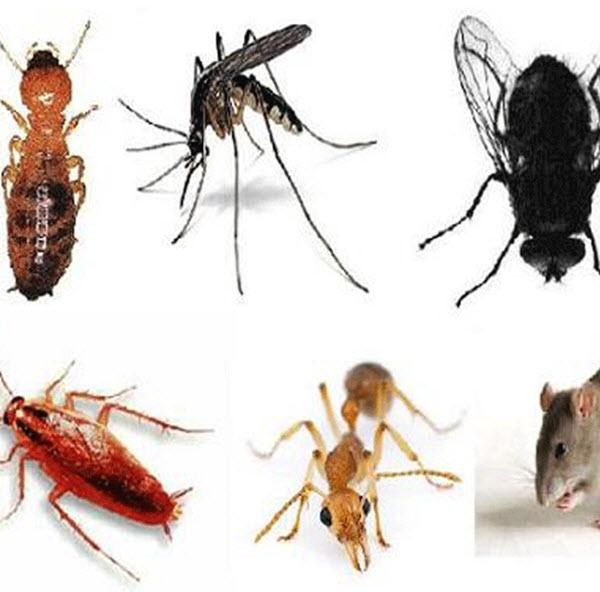Một số cách diệt côn trùng an toàn, hiệu quả, không cần dùng hóa chất