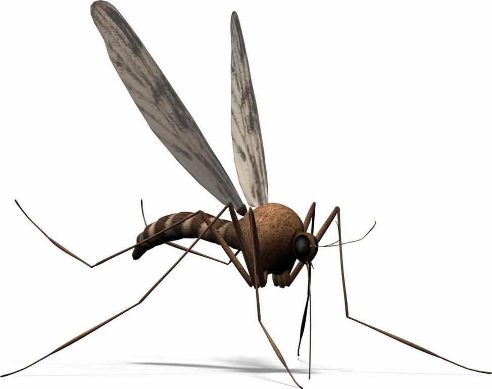 Muỗi thính nhất trong các loại côn trùng
