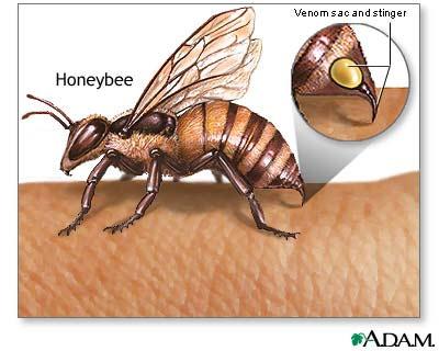 Dùng thuốc khi bị động vật cắn, côn trùng đốt