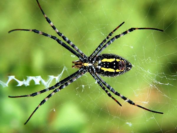 5 loài côn trùng có lợi cho cuộc sống con người bạn nên biết