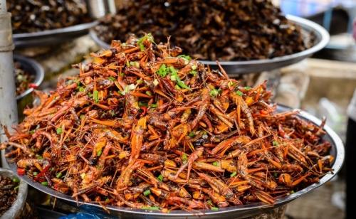 10 loài côn trùng ăn được mà chúng ta nên biết