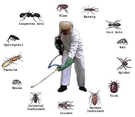 Dịch vụ kiểm soát côn trùng an toàn và hiệu quả