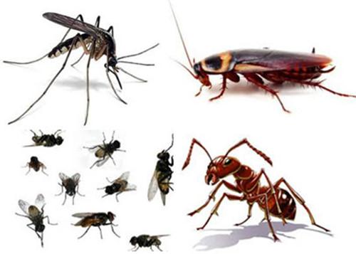 Những điểm lưu ý về lợi ích và tác hại của côn trùng