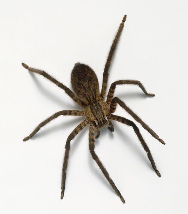 Tìm hiểu về một số loài côn trùng đang cư ngụ trong nhà bạn